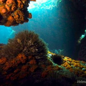Biología marina y oceanografía, Búsqueda