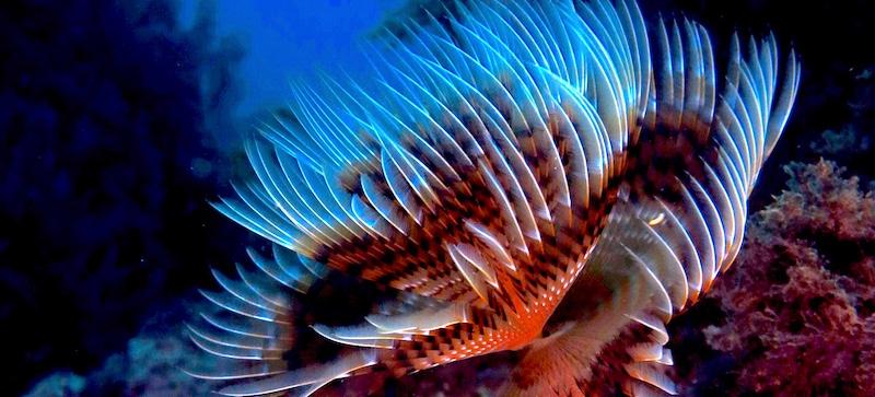 PADI Discover Scuba Diving à Almuñecar et à La Herradura, sur la Costa Tropical, en Espagne