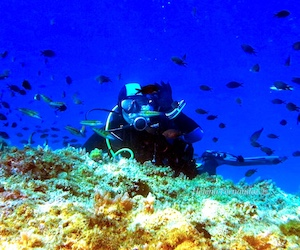 Become a PADI Advanced Open Water Diver and open up the best dive sites in Almunñécar, La Herradura and across Spain