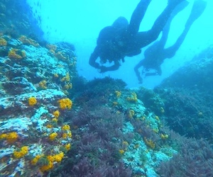 Navigate the dive sites of Almuñécar, Nerja and La Herradura with PADI Underwater Navigator Speciality.