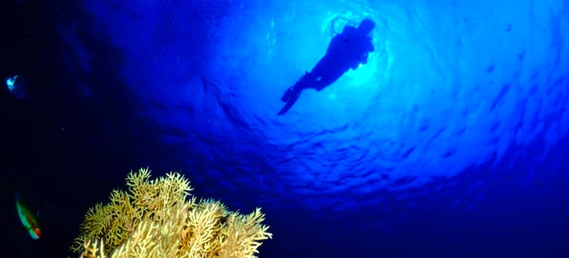 Dive the Costa Tropical, La Herradura, Nerja and La Torre at Almuñécar Dive Center